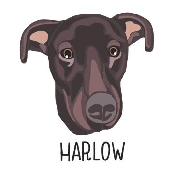 Harlow_forWEB.jpg