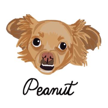 Peanut_forWEB.jpg