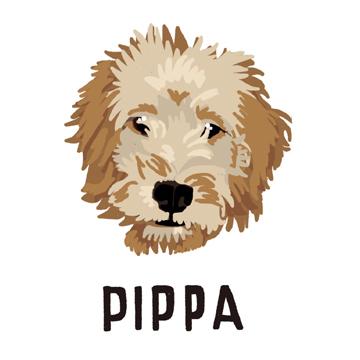 Pippa_forWEB.jpg