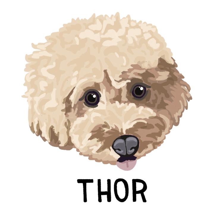 Thor2_forWEB.jpg