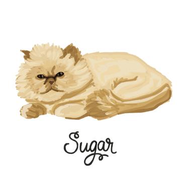 Sugar_forWEB.jpg