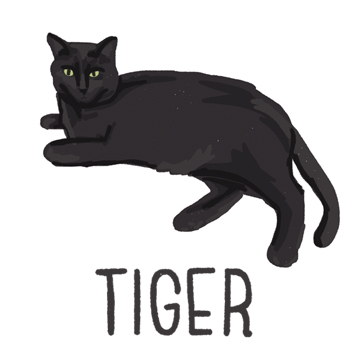 Tiger_forWEB.jpg