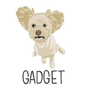 Gadget_forWEB.jpg