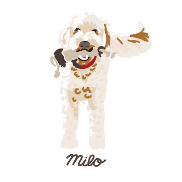 Milo_forWEB.jpg