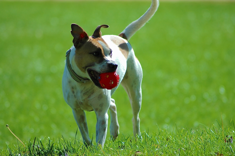 Gussie & the Red Ball.JPG