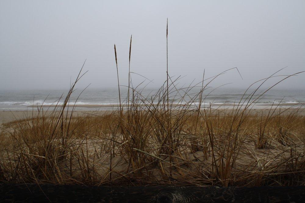 Dune Grasses.jpg