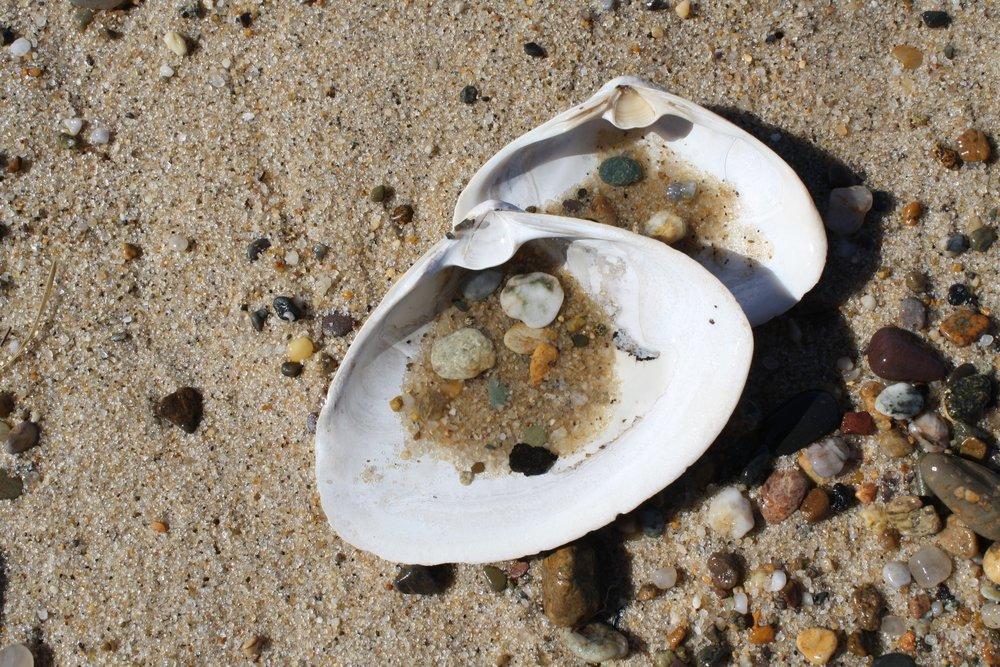 Two shells.jpg