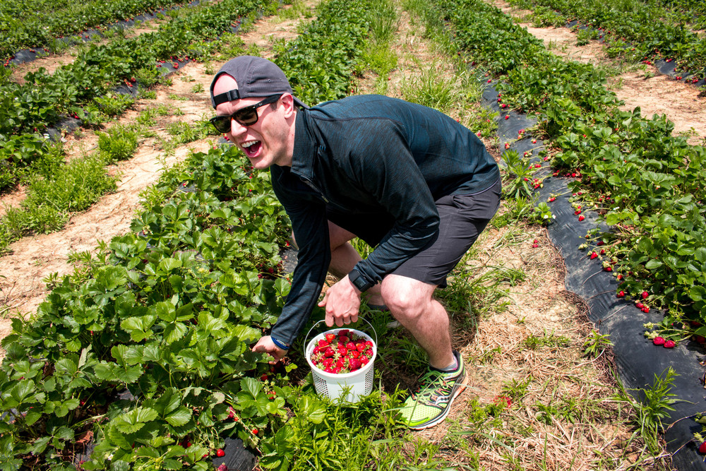 All of It - Strawberry Picking at Bradley Country Acres