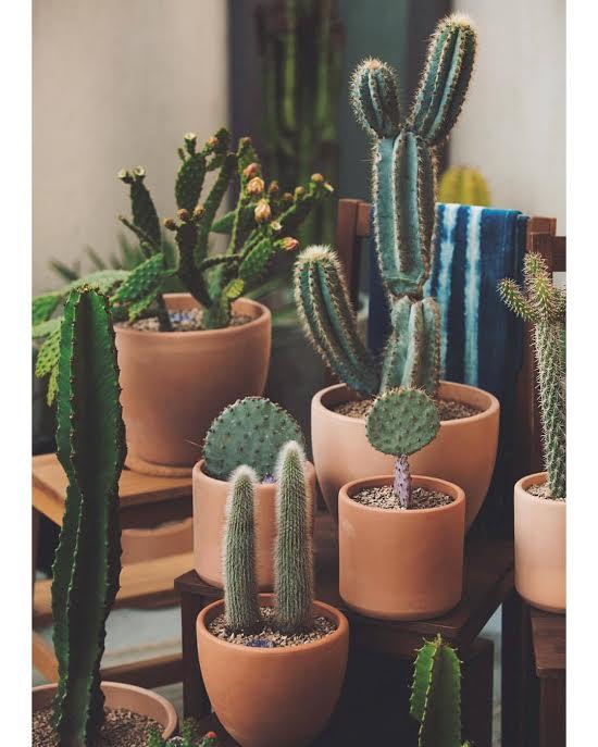 LA Cactus Co