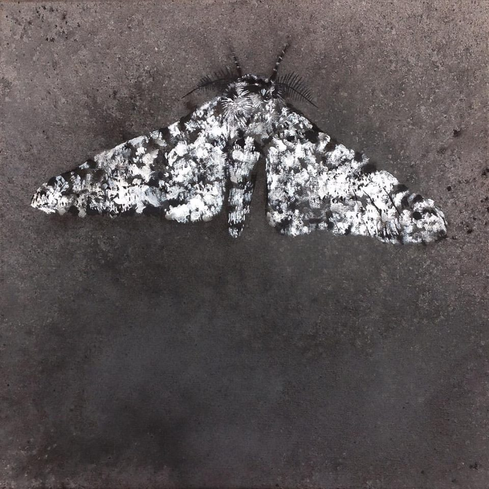 Abels - untitled (moth) - Acrylic on Linen - 12x12 inches.jpg