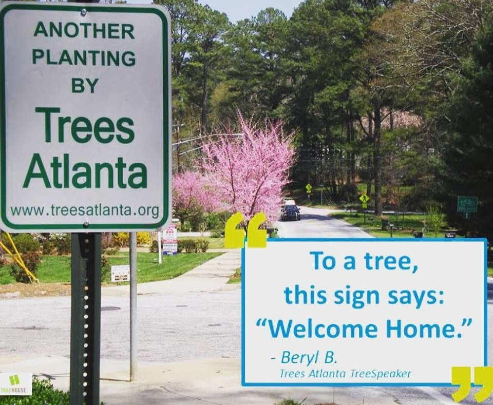 "Founded in 1985 by Central Atlanta Progress (the downtown business leaders association), the Atlanta Commissioner of Parks, and The Junior League of Atlanta, Trees Atlanta   was initially tasked with improving the tree canopy in downtown Atlanta. Despite the fact that the Atlanta metropolitan area is recognized by the National Forest Service as ""the most heavily forested urban area in the countr  y"", the Atlanta Central Business District was severely lacking in trees compared to other major cities across the country and around the world. Trees Atlanta met that challenge head-on, planting 40+ shade trees in downtown Atlanta in its first year. Since then, Trees Atlanta has expanded its focus to the entire metro area (inside I-285), and over 100,000 trees later, the mission continues to evolve."