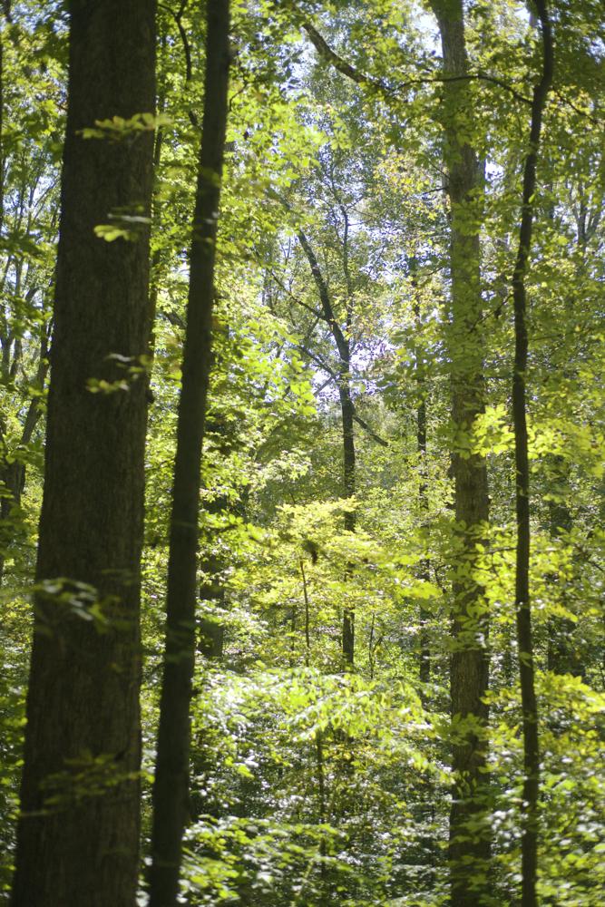 Deepdene-forest-general_DSC4295.jpg