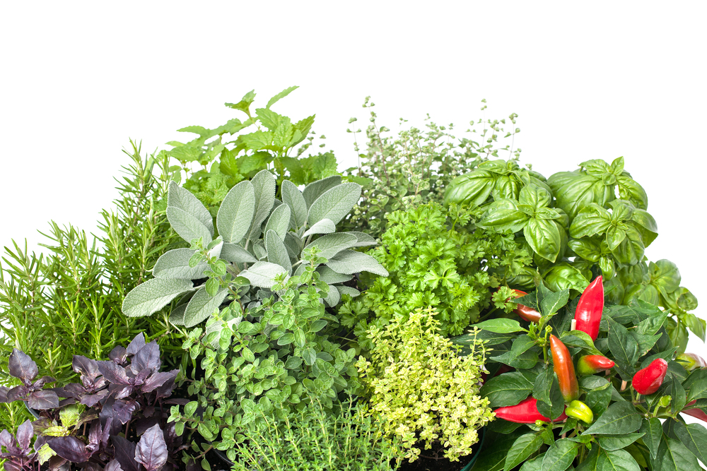 bigstock-Fresh-Kitchen-Herbs-48267344.jpg