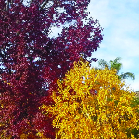 front trees.jpg