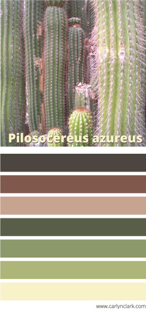 color-palette-pilosocereus-azureus