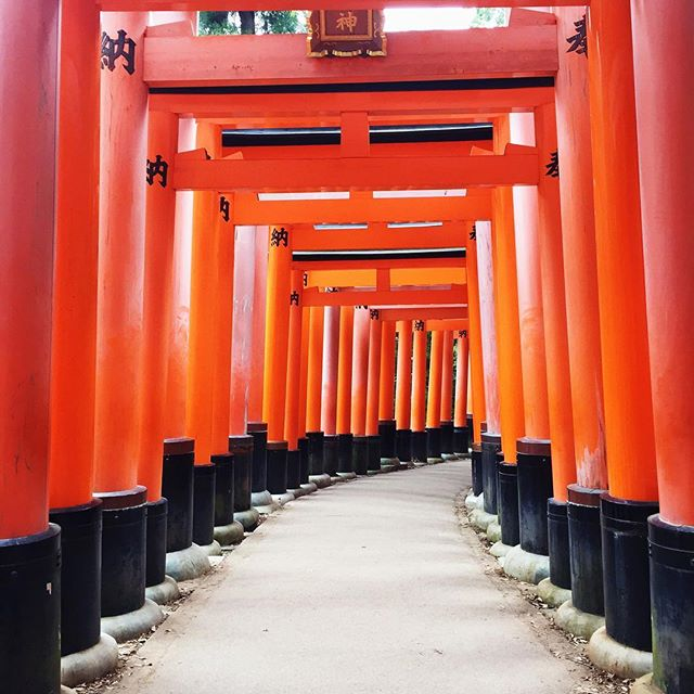 Never ending! ❤️ #fushimiinari #japan #kyoto #travel