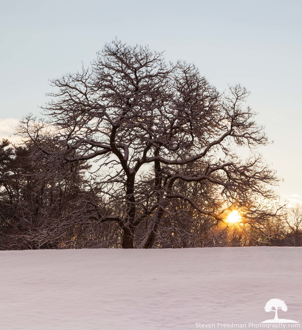 Snow Starburst