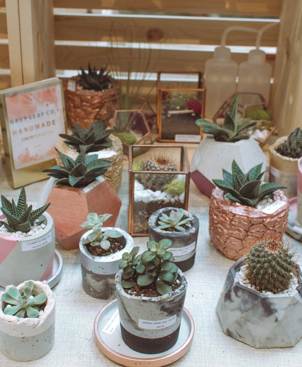 mini-cacti-succulent.jpg