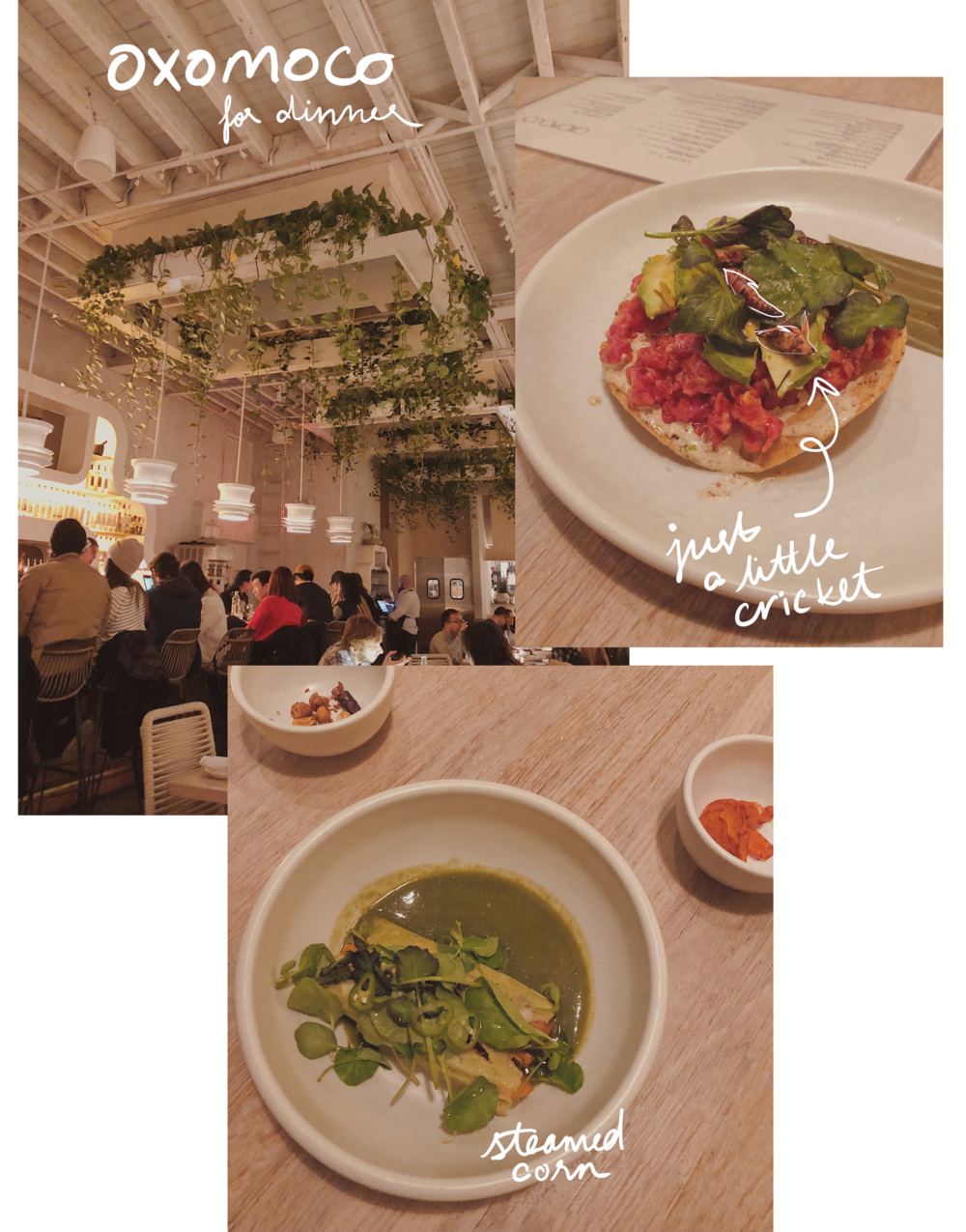 dinner-oxomoco-mexican-food-brooklyn