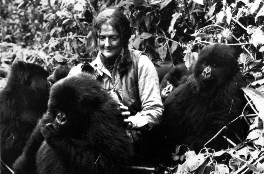 la-sci-sn-gorillas-in-the-mist-author-dian-fos-001.jpg