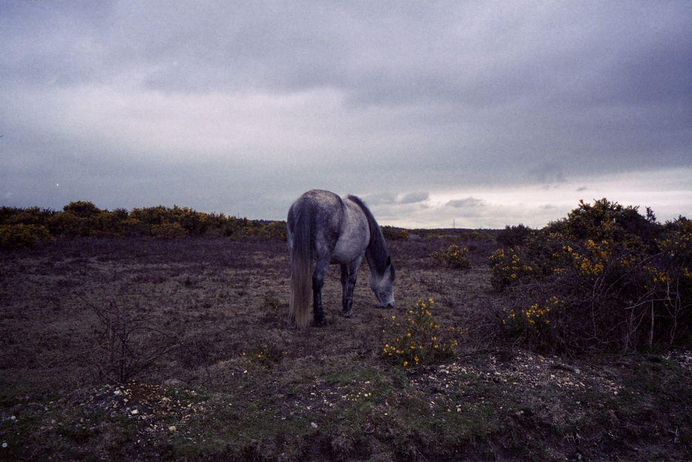 AlexHulsey_newforest_horse.jpg