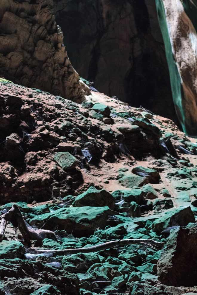 Algae grows on the rocks that get sunlight inside the caves