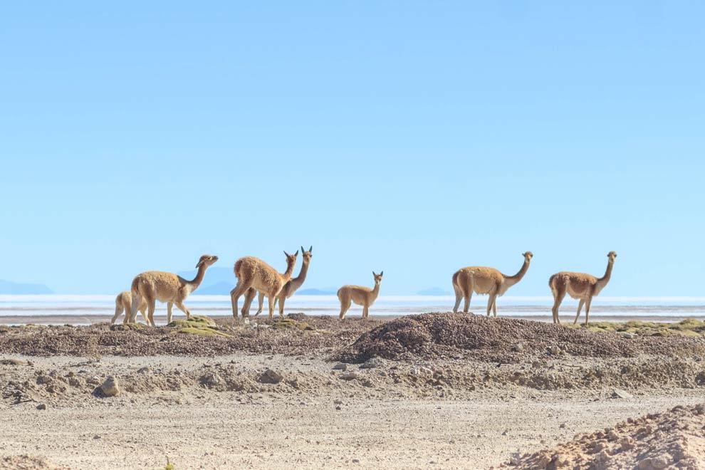 Salar de Uyuni, Bolivia, May 2016