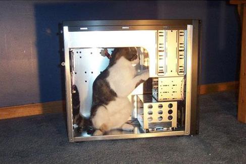 404-cat.jpg