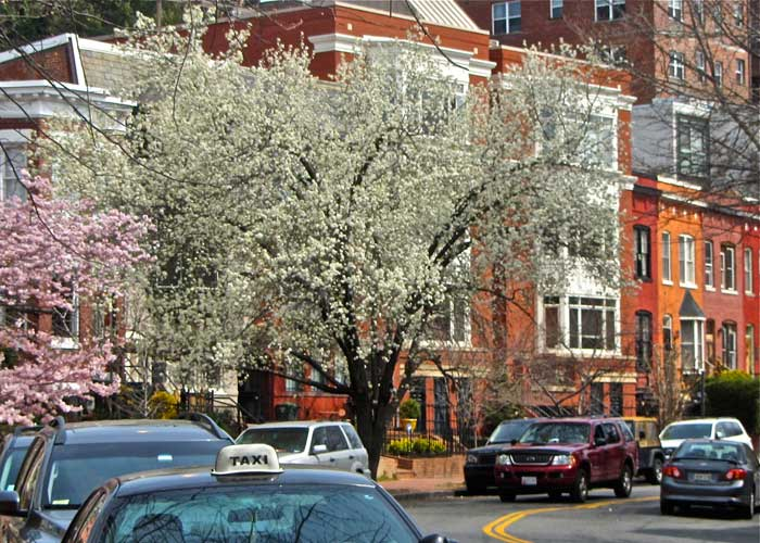 wt-photo-cityscape3-dc-tree-blossoms.jpg