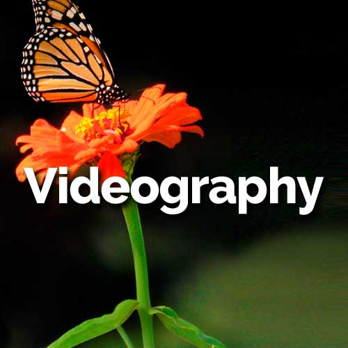 Video brings together audio and imagery to fully captivate an audience.