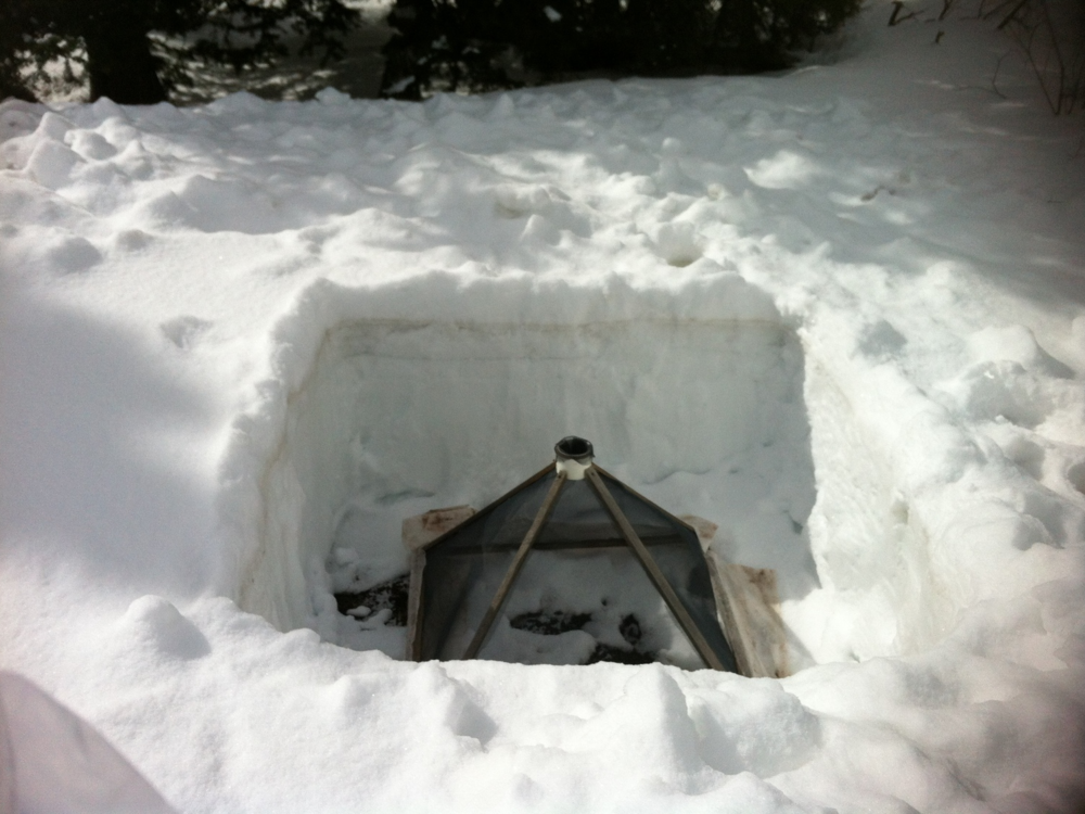 Bee emergence trap in snow pit