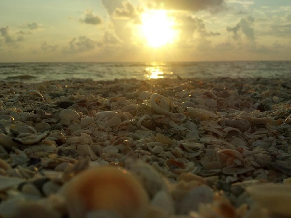 Naples shells.jpg
