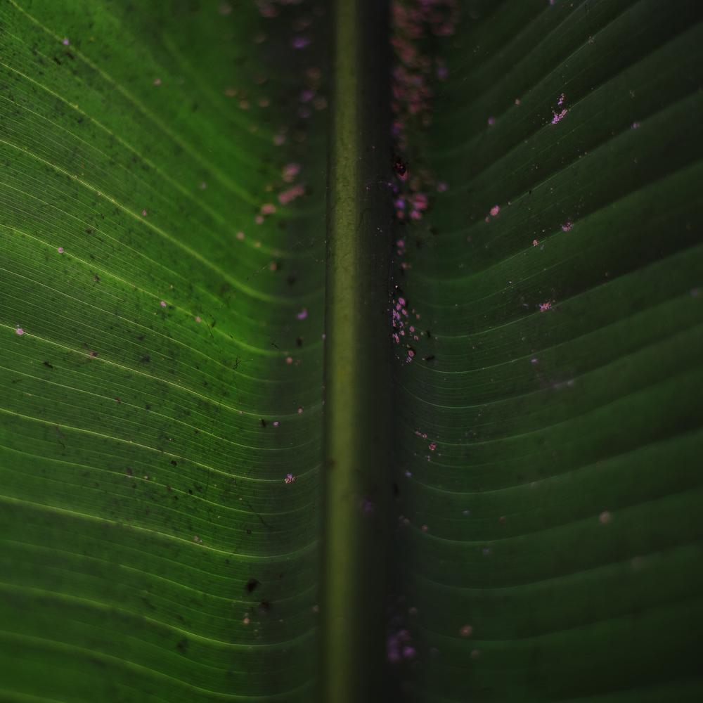 Chute (Palm)