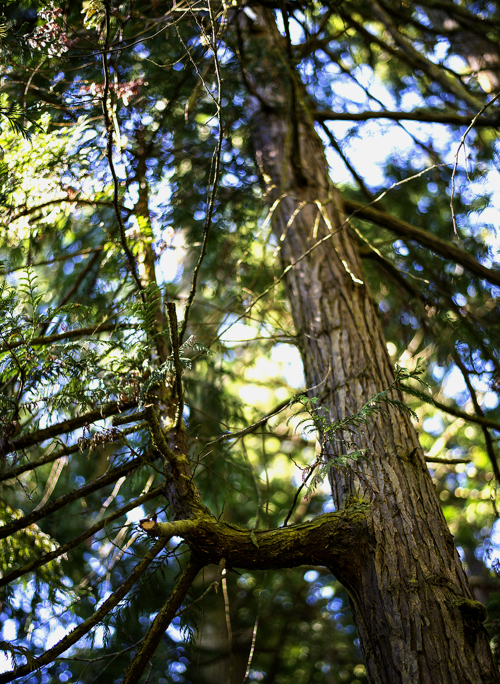 Secondary (Pine)