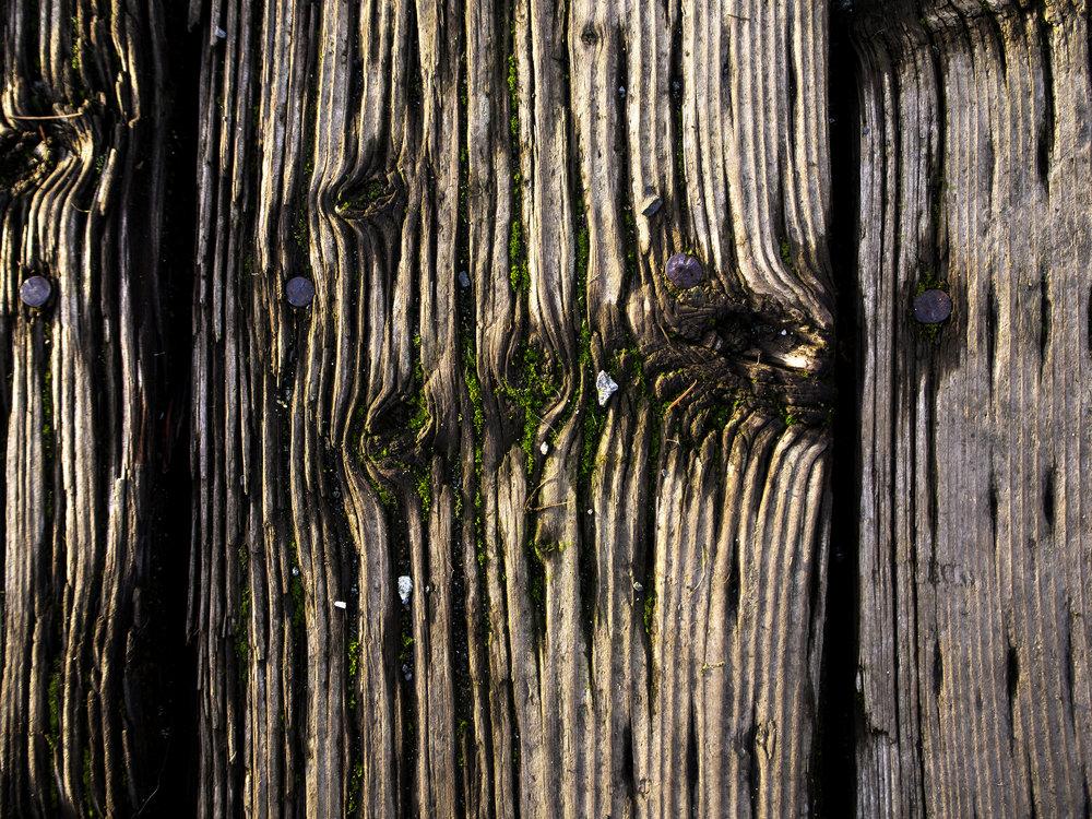 Moss_2.jpg