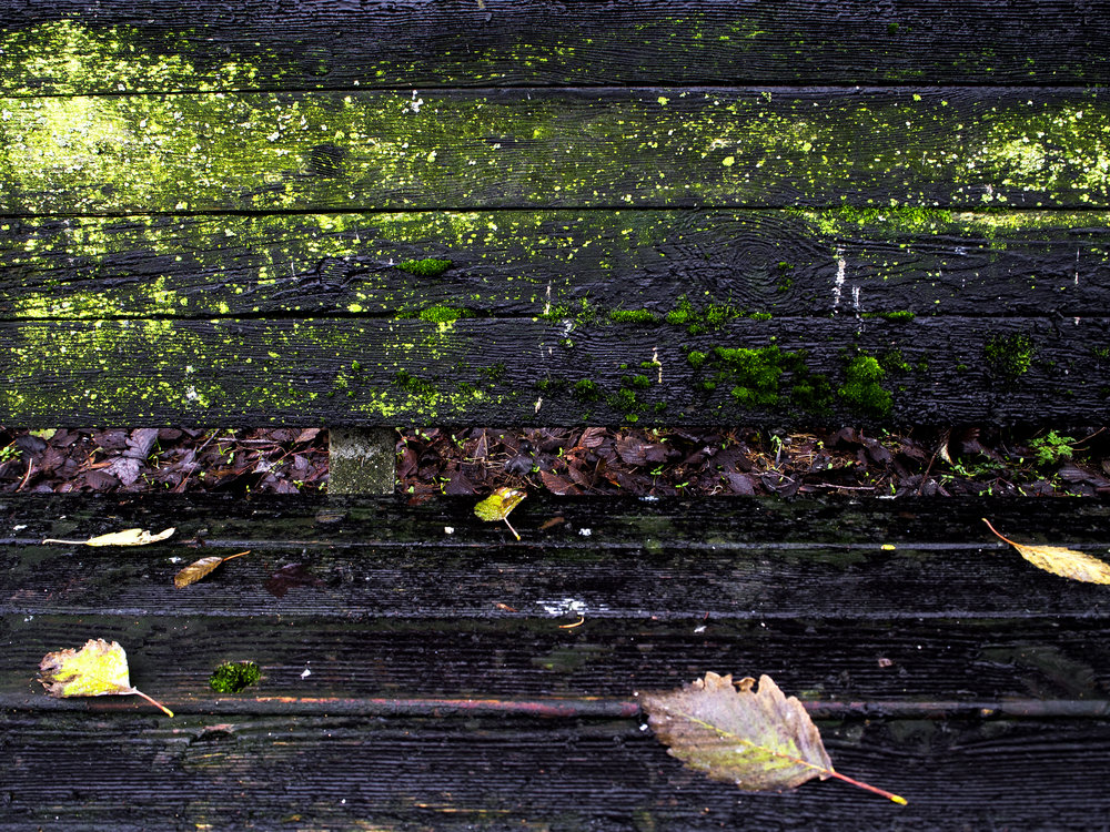 Moss_1.jpg