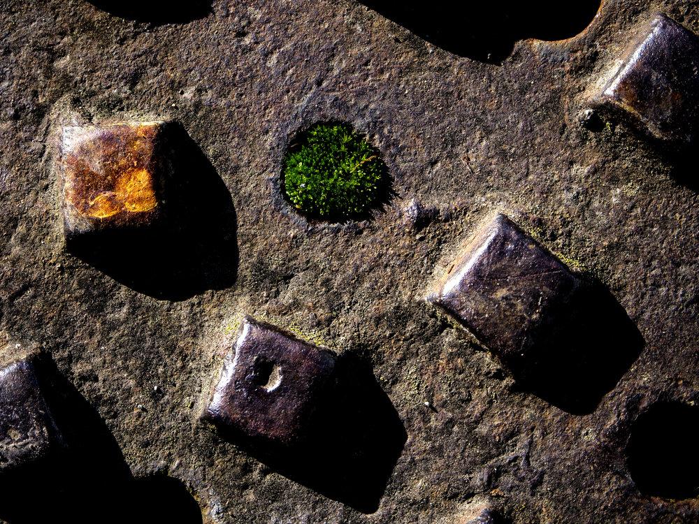 Moss_4.jpg