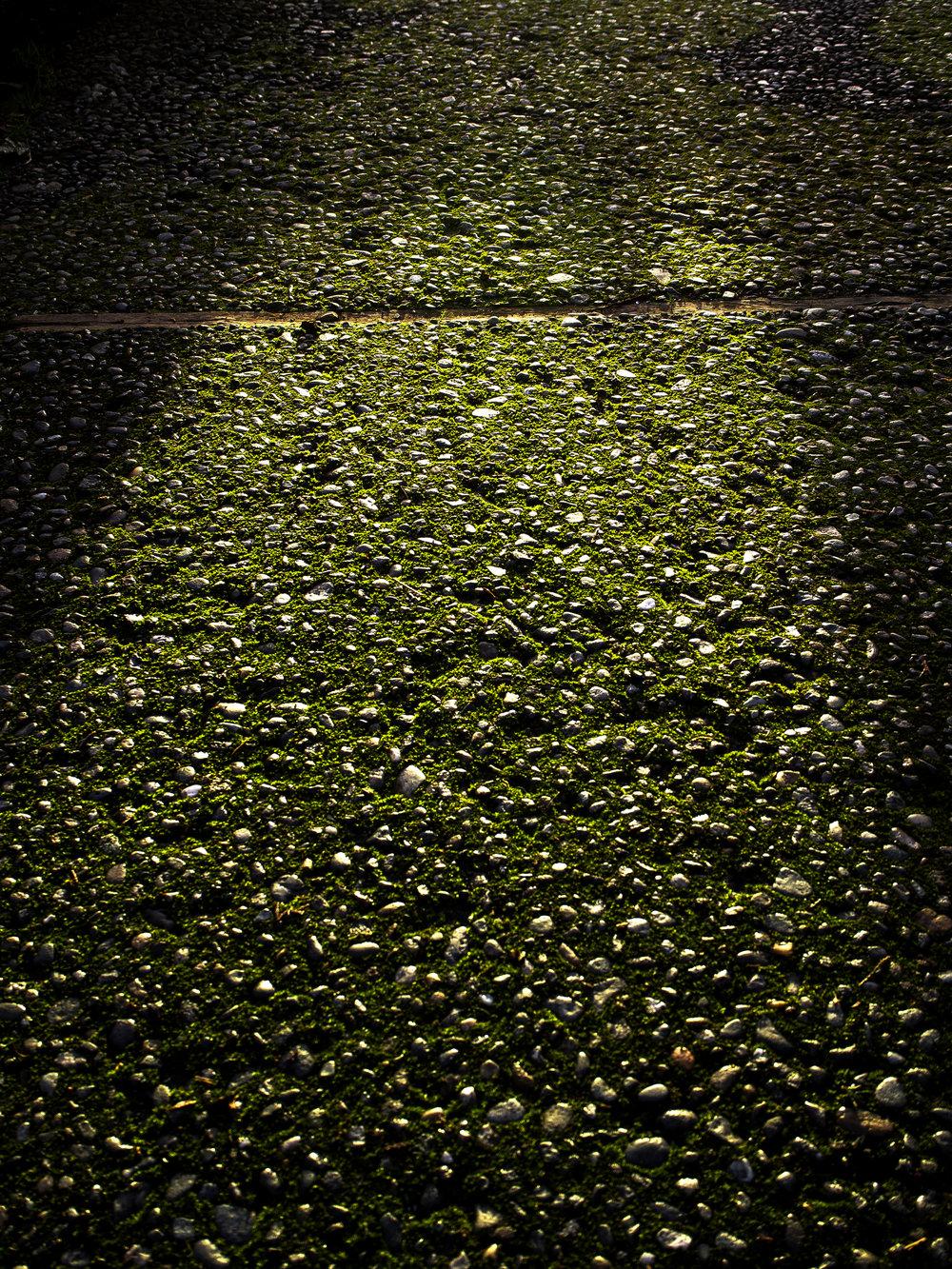Moss_9.jpg