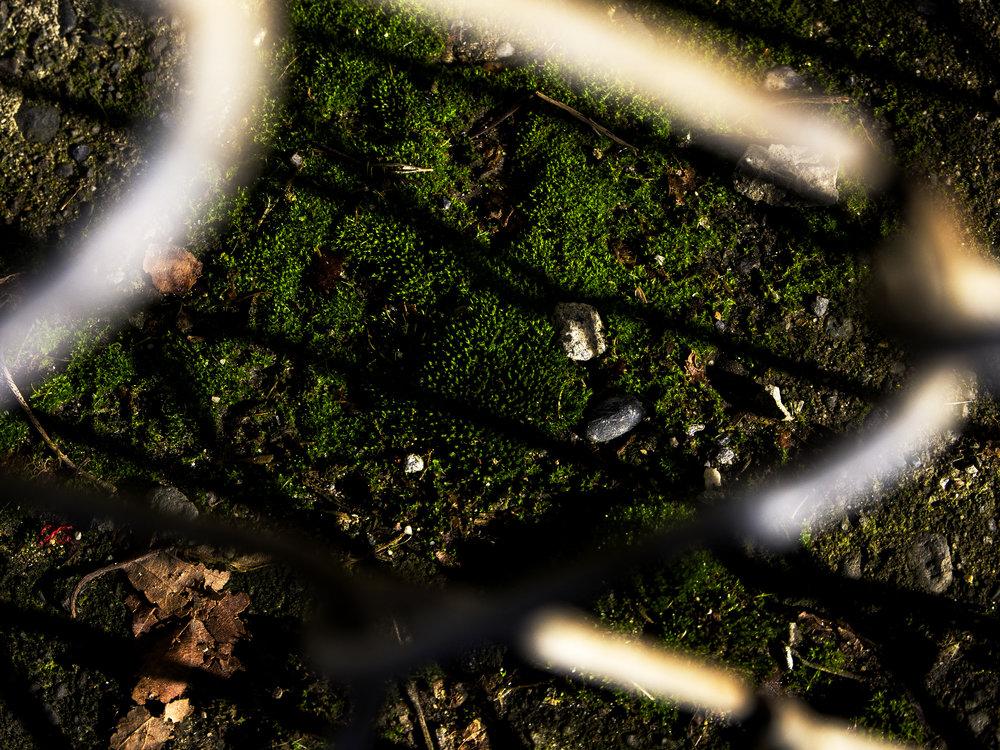 Moss_10.jpg