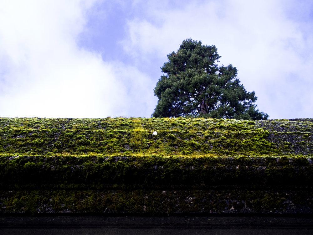 Moss_11.jpg