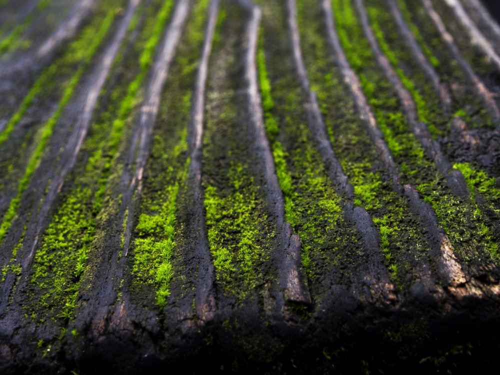 Moss_20.jpg