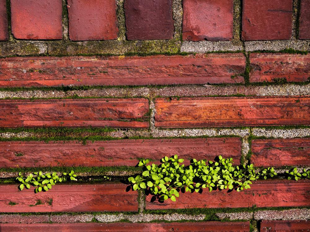 Moss_5-1.jpg