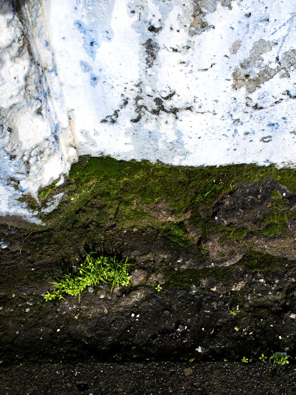 Moss_24.jpg