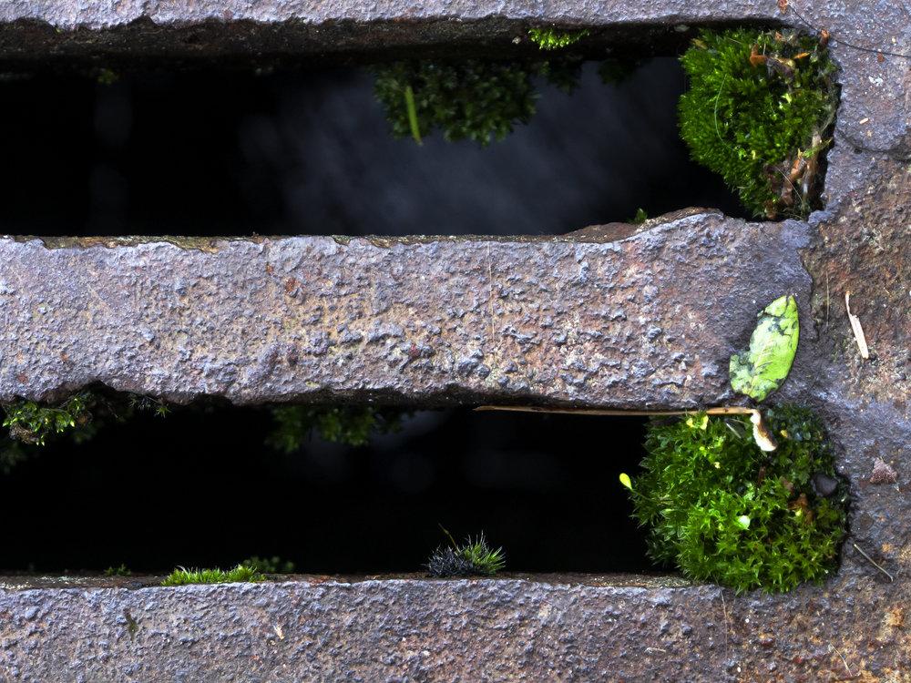 Moss_26.jpg
