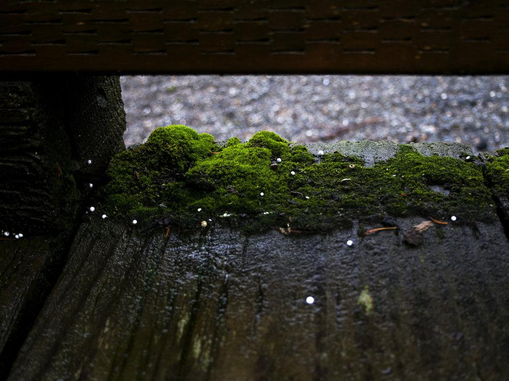 Moss_29.jpg