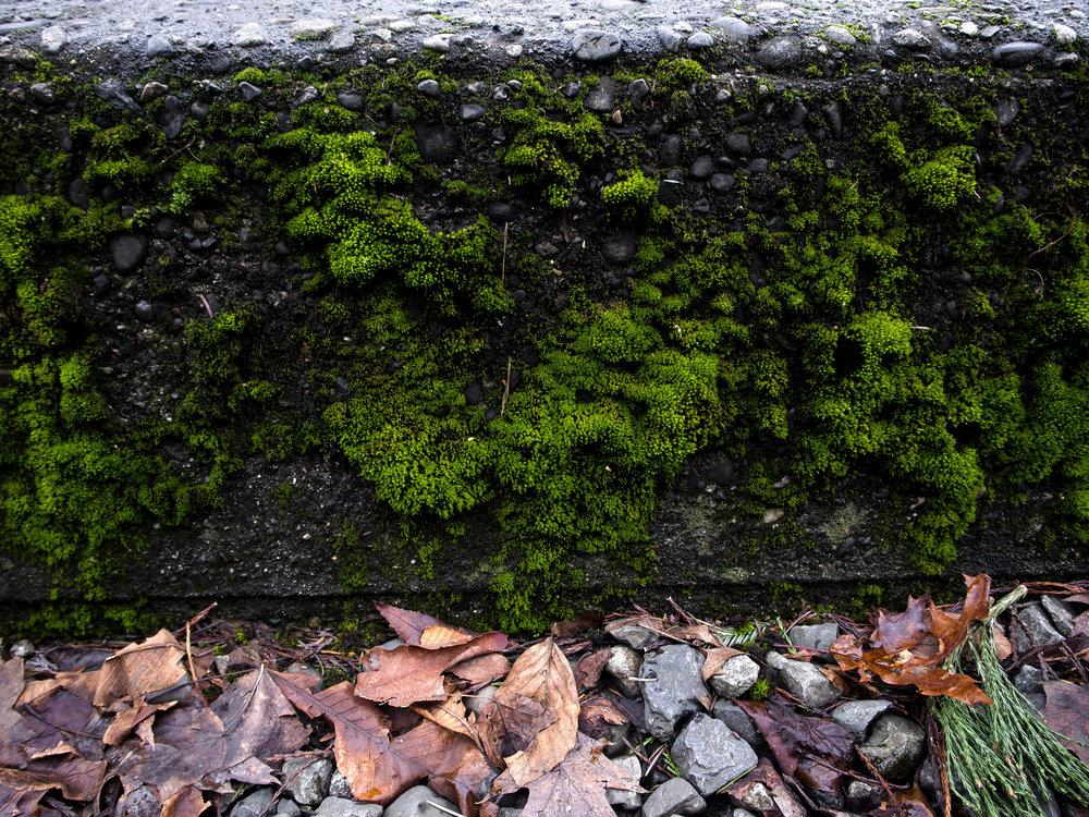 Moss_31.jpg