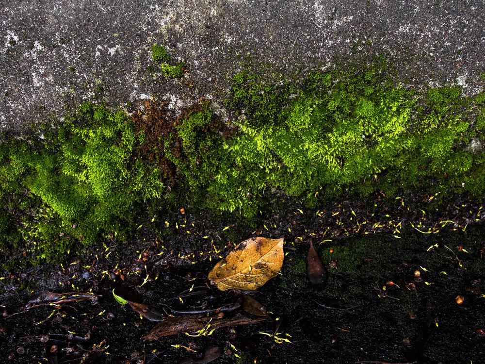 Moss_33.jpg