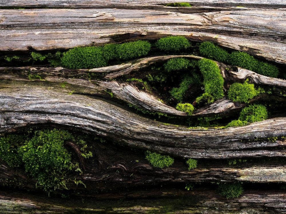 Moss_34.jpg