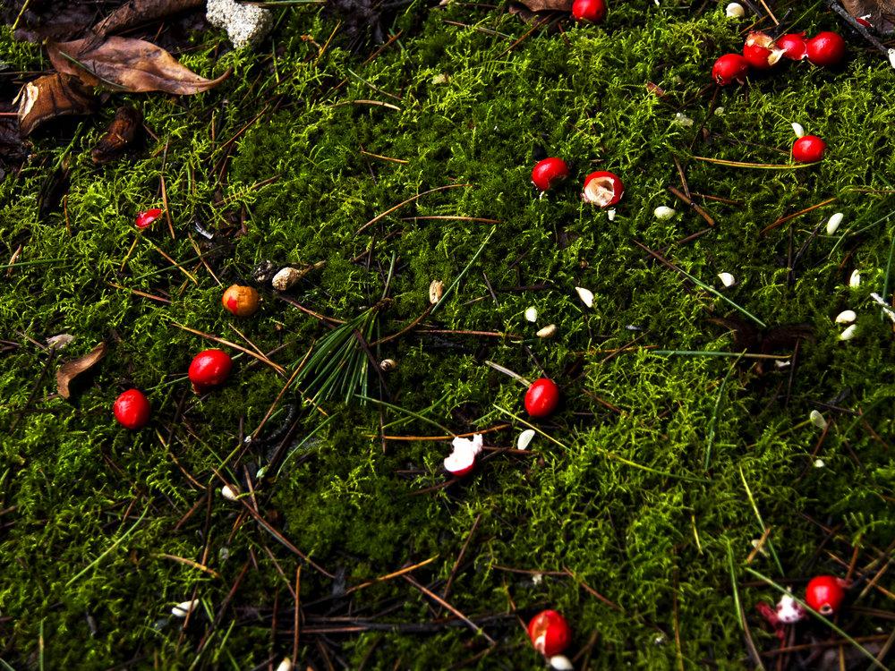 Moss_35.jpg