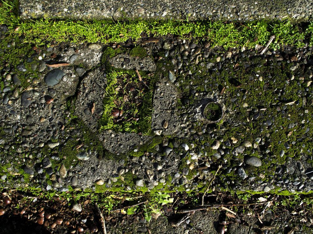 Moss_28-1.jpg